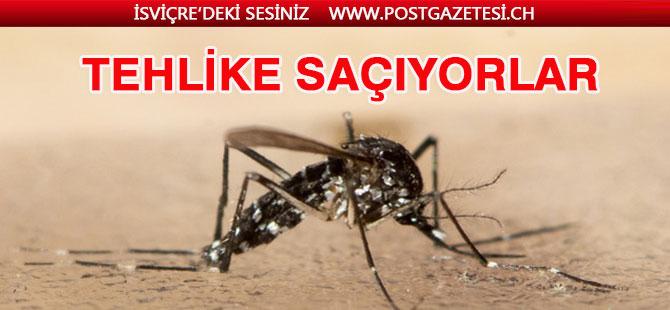 Kaplan Sivrisinekleri Schaffhausen de tehlikeli oluyor