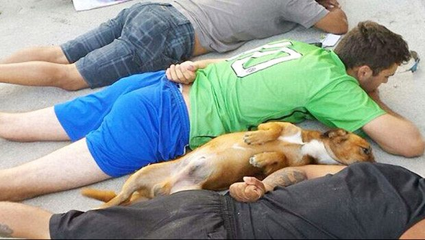 Köpek de sahipleri ile birlikte teslim oldu!