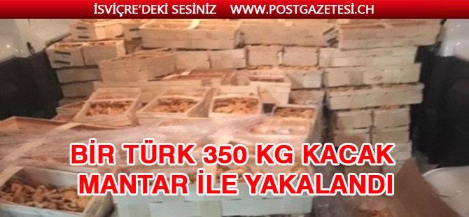 Bir Türk 350 kg- kacak mantar ile yakalandi