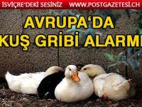 Kuş gribi gerekçesiyle 115 bin ördek öldürüldü