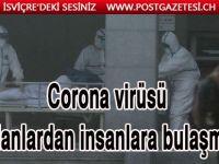 Koronavirüsünün yılanlardan insanlara geçtiği açıklandı
