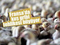 Fransa'da kuş gribi tehlikesi büyüyor