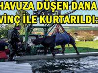 DANA'YI HAVUZDAN POLİS KURTARDI